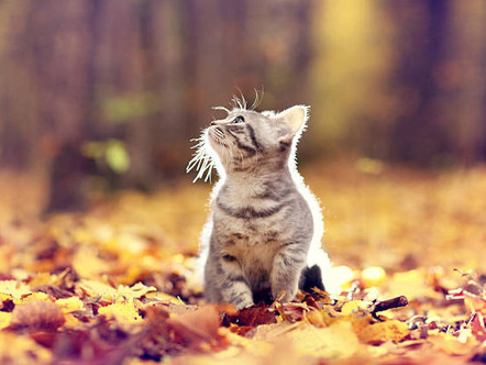 Autumn is statistically the most dangerous time for cats