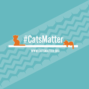 Introducing #CatsMatter- Why We Do It & Our Mission