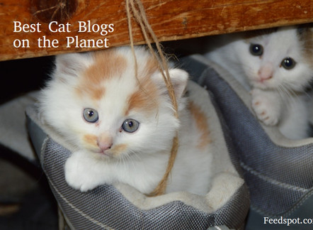 Top cat blogs from around the globe