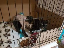 Cats on Cage Rest Following a Road Traffic Accident