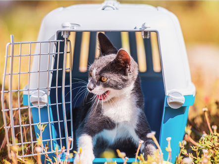 Cat Safety in Cars – keeping your precious cargo safe from harm!
