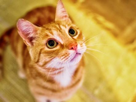 CatsMatter Hero of the Month - Adam Llewellyn