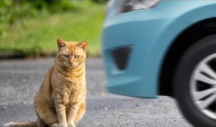 CatsMatter on Track to Help Wales Become the First Country to Scan All Deceased Pets