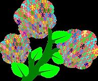 AprilAtArd_ Flower-1.png