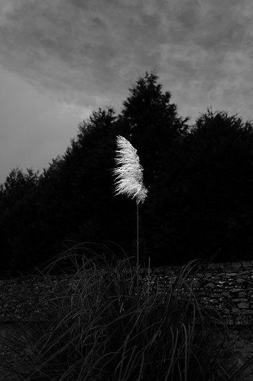 White Flower - Outside