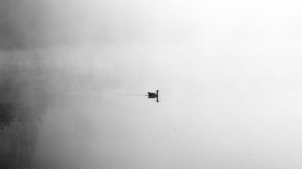 Mistic Foggy Lake