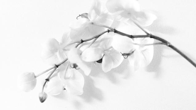 blurrystories-17_edited.jpg