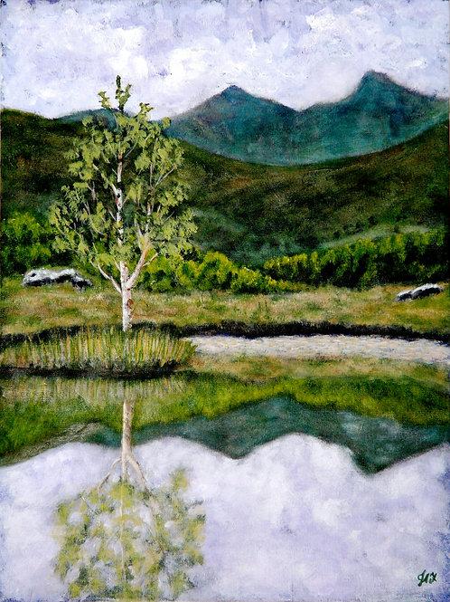 Lily Tarn Fine Art Print