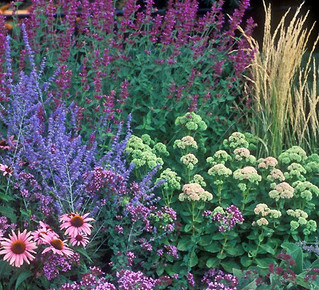 Add perennials & grasses for fall beauty!