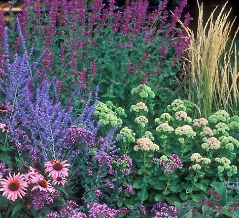 Perennials in late summer.