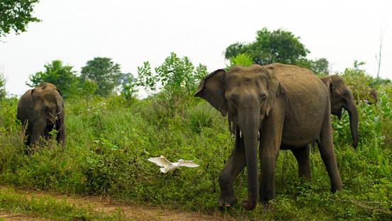 Sri Lanka - Jordan Carroll Film