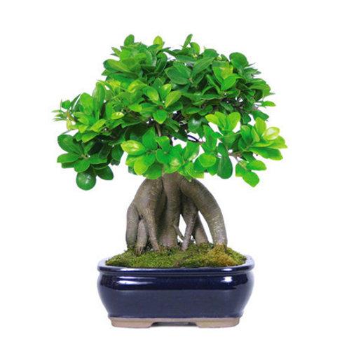 ต้นไม้ตัวอย่าง 1