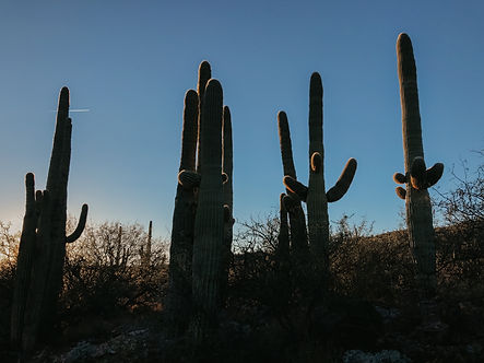 saguaro arizona