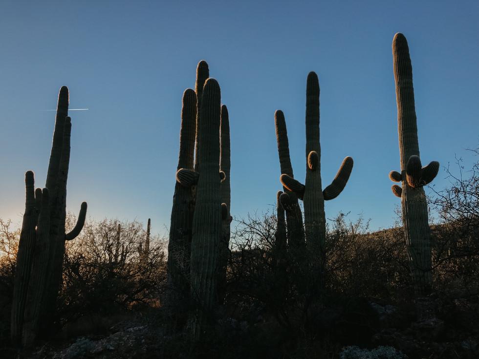 saguaro arizona wedding photographer