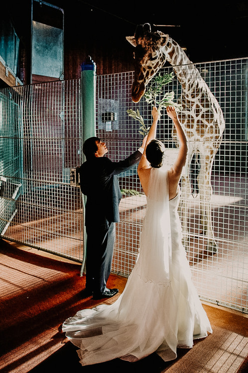 zoo wedding photos with giraffe