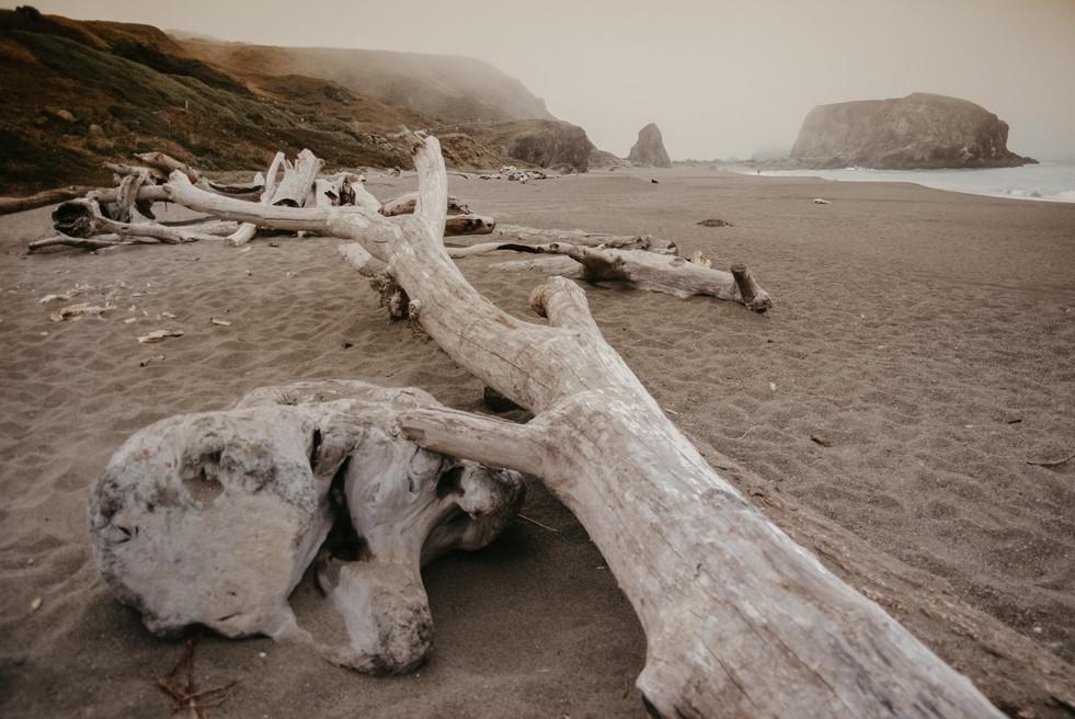 california beach elopement