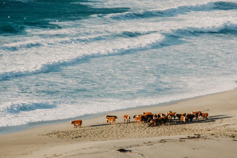 big sur beach california