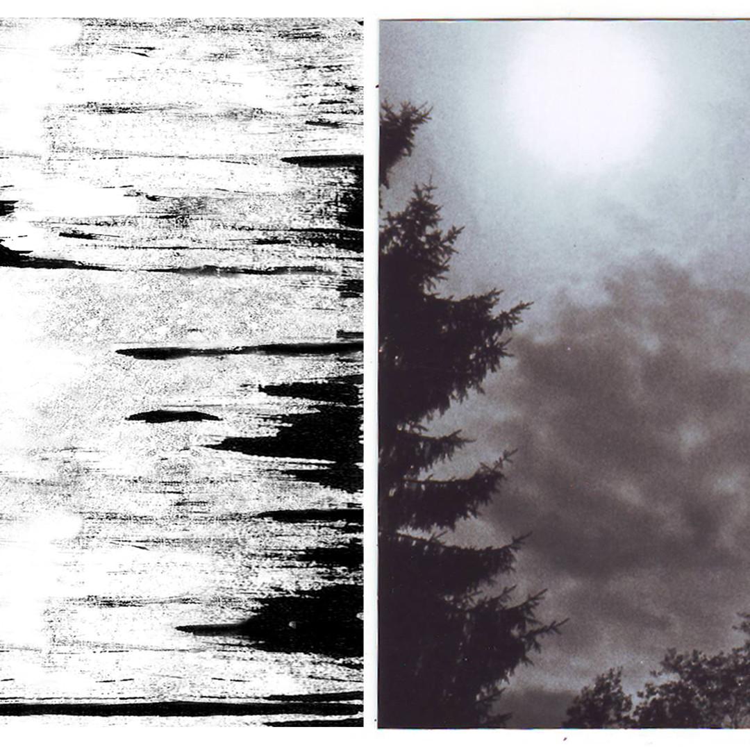 design inspiration - trees