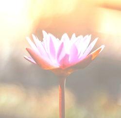 Pink%25252520orange%25252520flower_edite