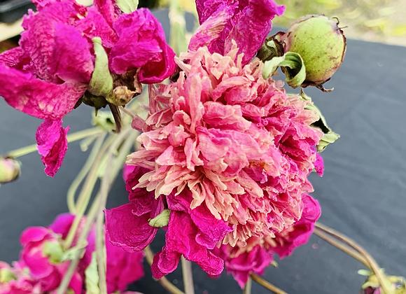 Dried Peony Bouquet