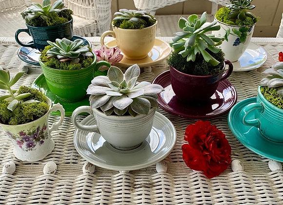 Succulent Teacup Planters
