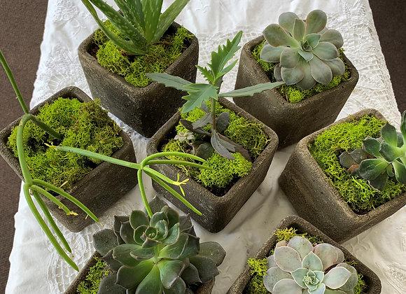 "4"" Succulent Planter"