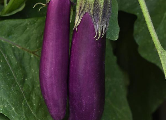 "Eggplant - Asian Delight 4"""