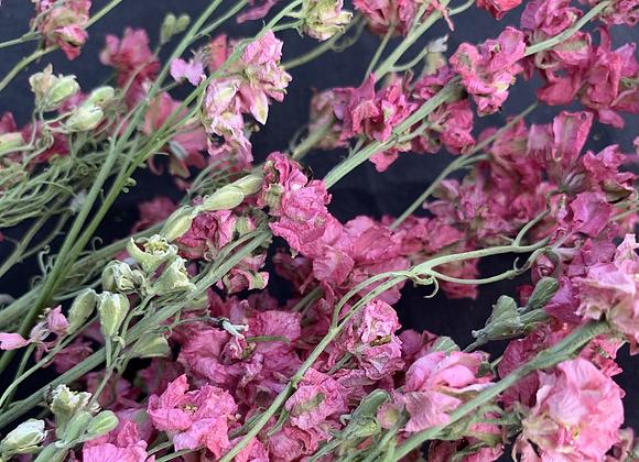 Dried Larkspur bouquets
