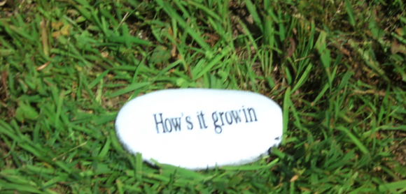 HOW'S IT GROW'IN STONE