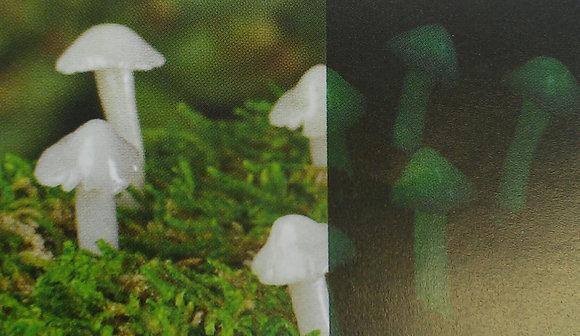 Fiddlehead Fairy MUSHROOMS (SET OF 7)