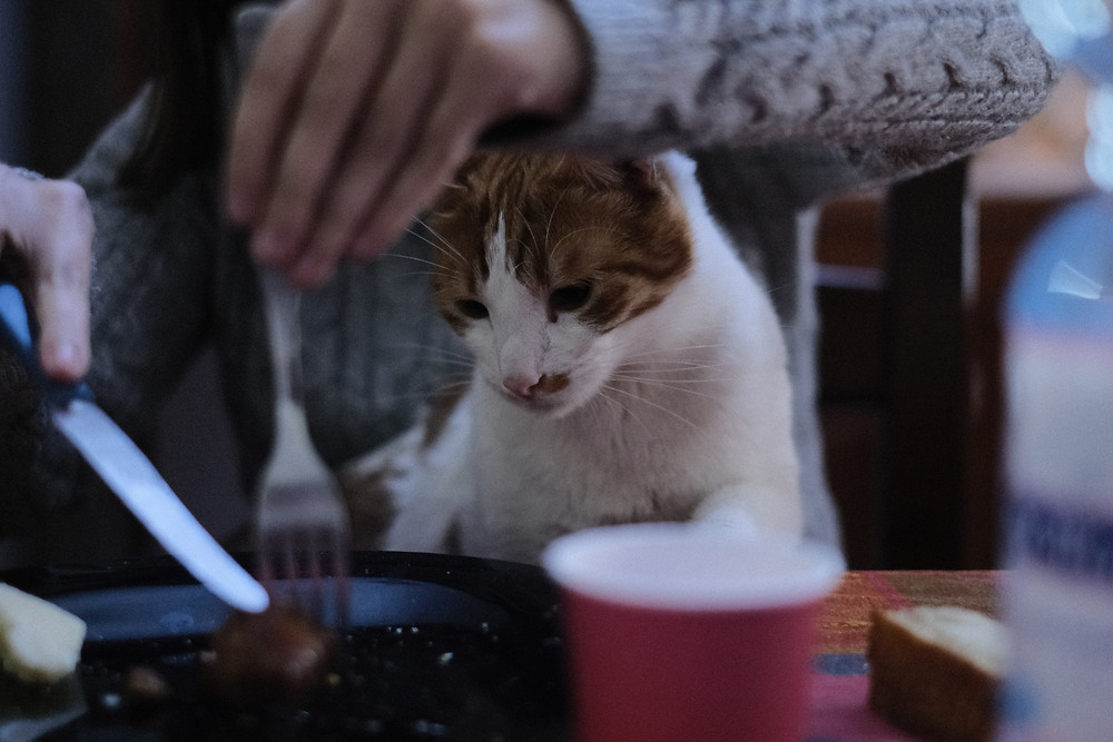 食事を見つめる子猫