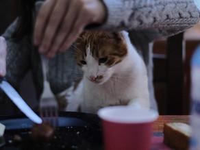 【猫の飼い主必見】猫はウェットフードの方が良いって本当?