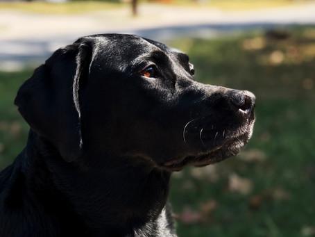 【獣医師が解説】犬の避妊手術−適切な時期・メリット・リスク