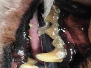【小さい頃から重要】年1回の歯科スケーリングが死亡リスクを下げる!!