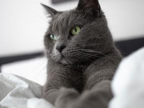 """【獣医師が解説】猫の顎の黒いぶつぶつ""""猫ニキビ""""の原因・予防法・治療法"""