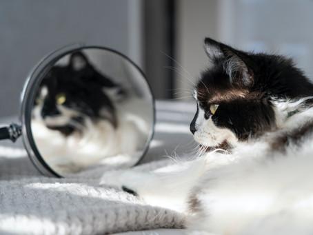 猫が見えてる世界(色)色覚を徹底解説
