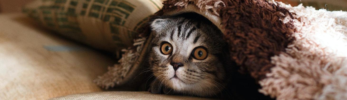 ブランケットの下の猫