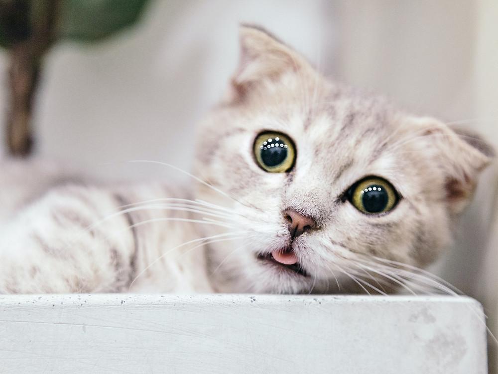目を見開いた猫