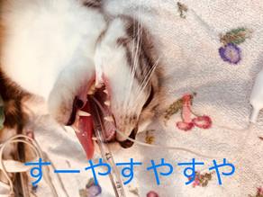 大田区のTNRは無料で手術ができます