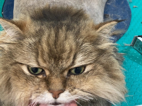 【獣医師こだわりのネコトリミング イヌトリミング】
