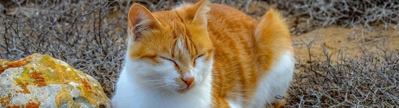 cat-3775401_1920_edited_edited.jpg