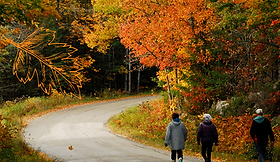 Fall photo 1.png