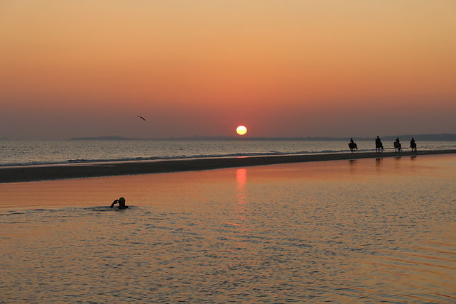 Swimmer in water with sunset and horses on the sand bank