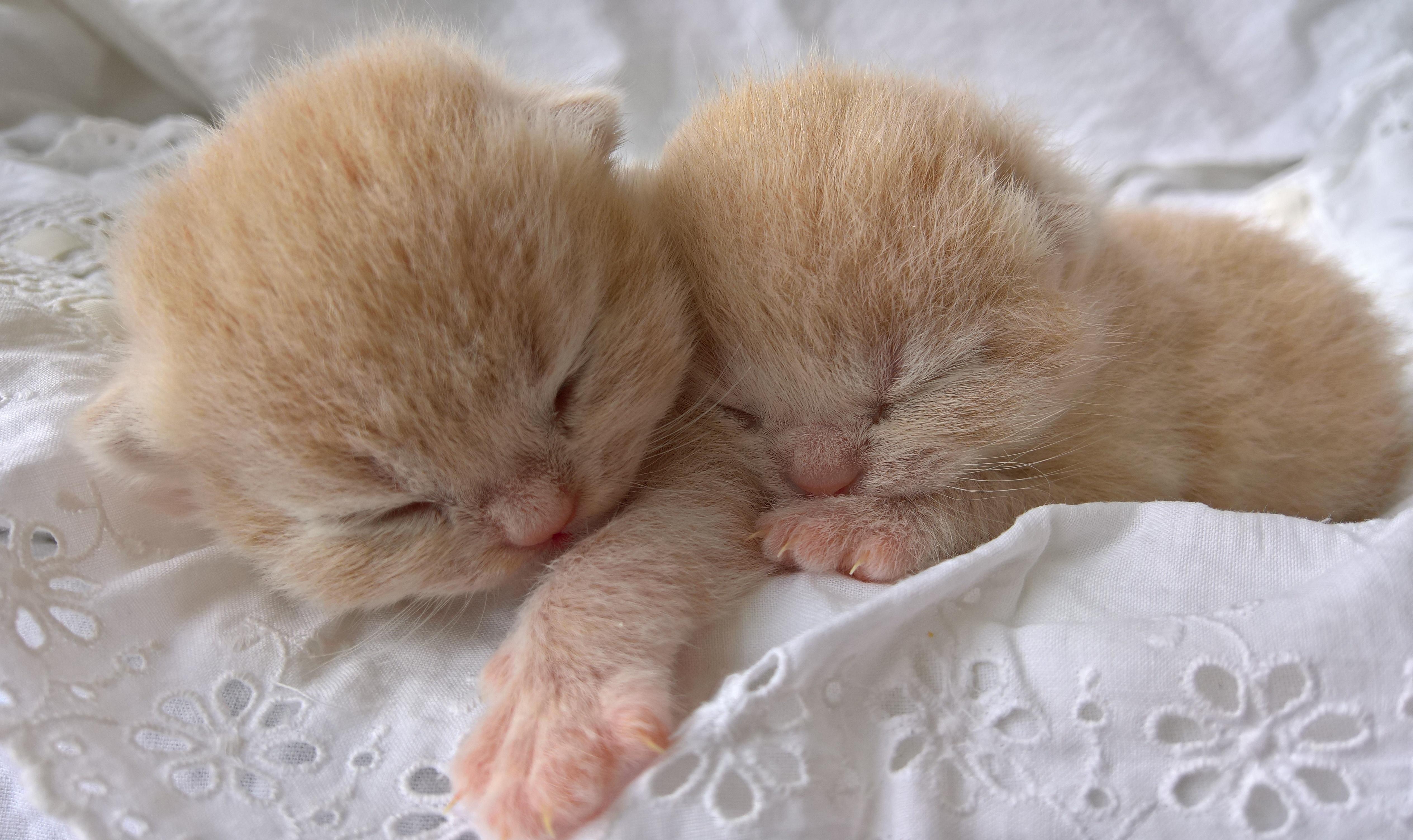 Albert och Agnes