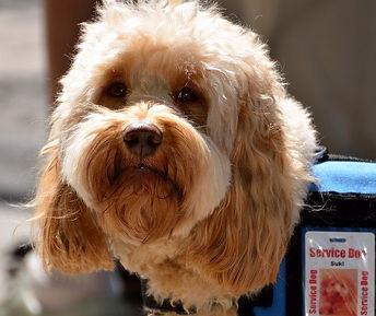 service-dog-1633976_640.jpg