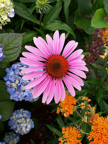 Flower at Kidd's Bluff Garden.jpg