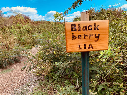 blackberry sign.jpg