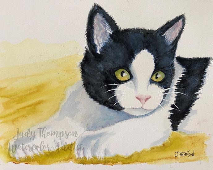 """""""Tuxedo Kitten"""""""