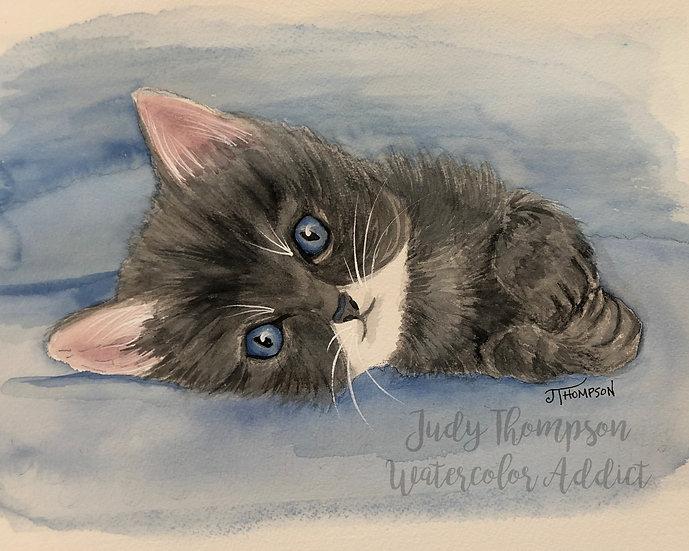 """""""Grey Kitten"""""""