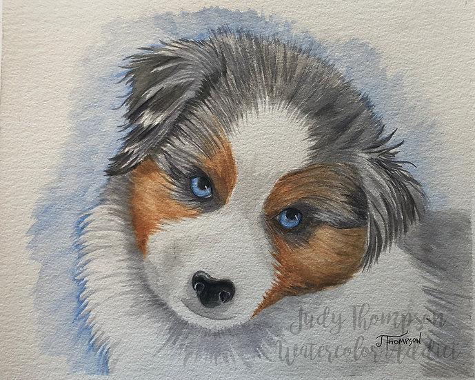 """""""Australian Shepherd Puppy"""""""